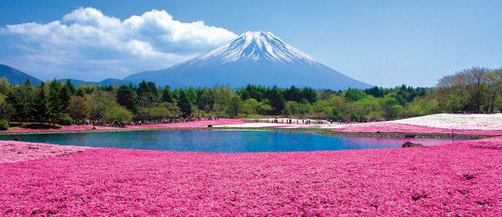 Indahnya Higashimoto, Bukit Pink di Kawasan Jepang