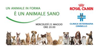 Clinica Veterinaria Cinisello e Royal Canin per l'alimentazione dei gatti