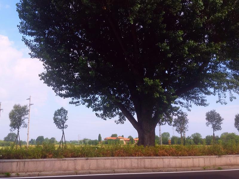 Paesaggio del Parco Agricolo Sud dall'Abbazia di Chiaravalle